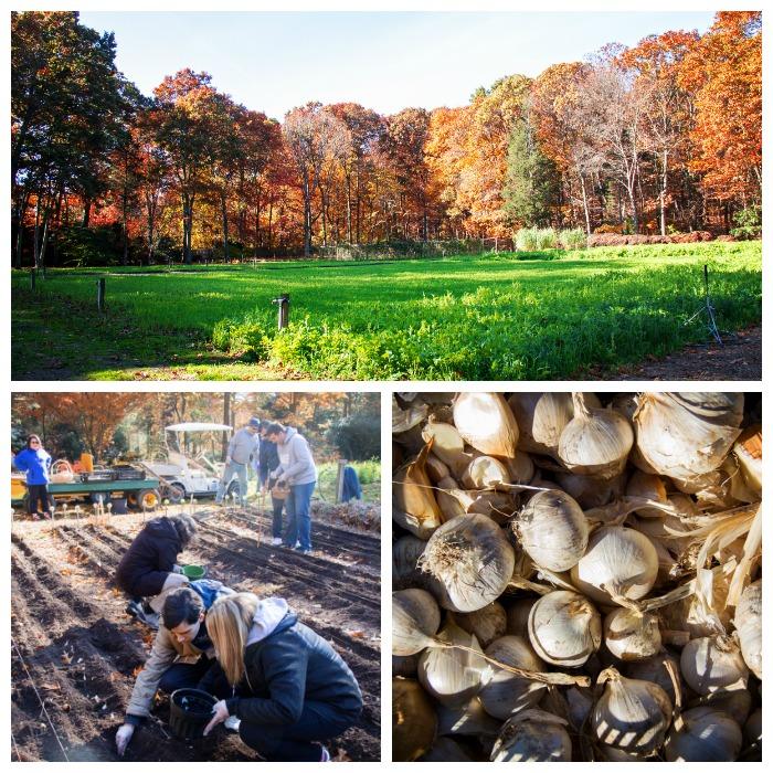 elija-farm-11-11-16-1