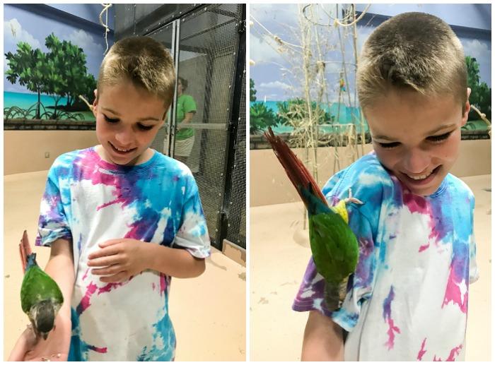brett & parrot 6.18